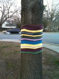 Yarn Bombed Tree, Looking Glass Cafe