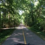 Carrboro Greenways Have Great Tree Canopies